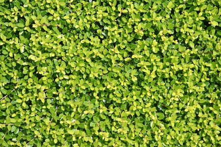 A background of green vegetation growing on a wall Stock fotó