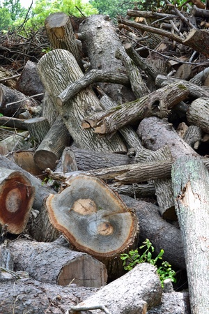 A pile of logs and branches after being cut and collected Reklamní fotografie