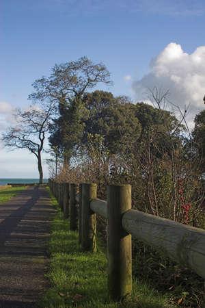 coastal path leading to beach photo