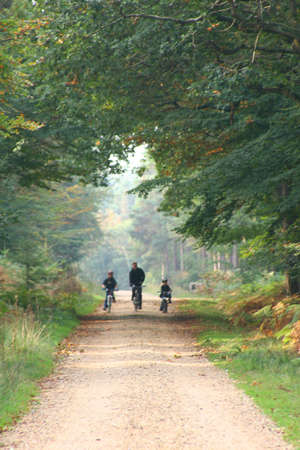 glades: Father & sons cycling through forest Stock Photo