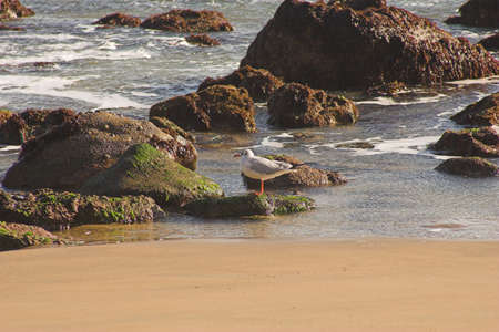 waters  edge: Seagull on rocky waters edge Stock Photo