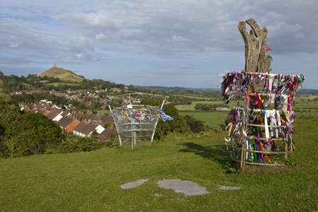 The holy Glastonbury Thorn and the glastonbury Tor in the background, Somerset  photo