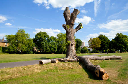brixton: The beautiful Brockwell Park in Brixton, London