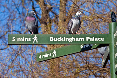 st james s: Some Pigeons on pedestrian signposts in London