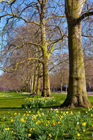 st james s: The beautiful St  Jamess Park