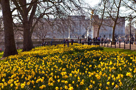 st jamess: The beautiful view of Buckingham Palace from St  Jamess Park Editorial