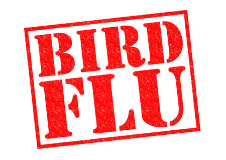 avian flu: BIRD FLU red Rubber Stamp over a white background. Stock Photo