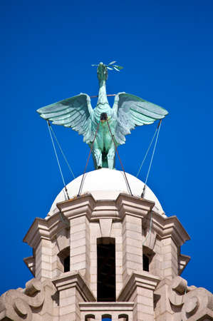 A Liver Bird statue perched ontop of the Royal Liver Building in Liverpool  photo