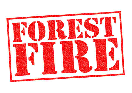 bushfire: FOREST FIRE red Rubber Stamp over a white background.
