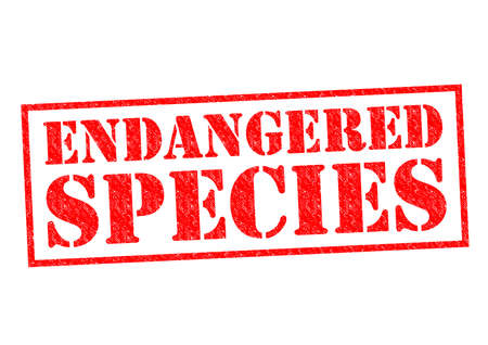 endangered species: ENDANGERED SPECIES red Rubber Stamp over a white background. Stock Photo