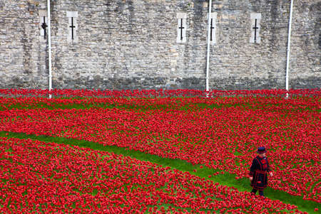 A Yeomen Warder walking amongst the ceramic Poppies at the Tower of London