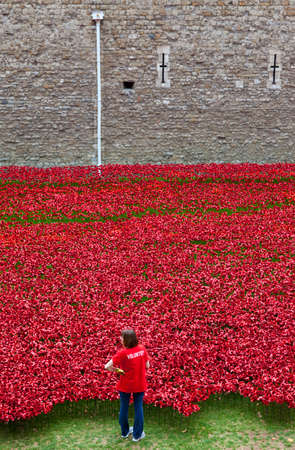 A Volunteer helping set up the Ceramic Poppy Installation at the Tower of London