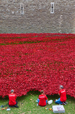 Volunteers Setting up the Ceramic Poppies at the Tower of London