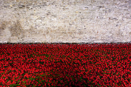 A view of the ceramic Poppies of the Blood Swept Lands and Seas of Red installation at the Tower of London.  The installation was created by artist Paul Cummins to mark the centenary of the outbreak of the First World War. photo