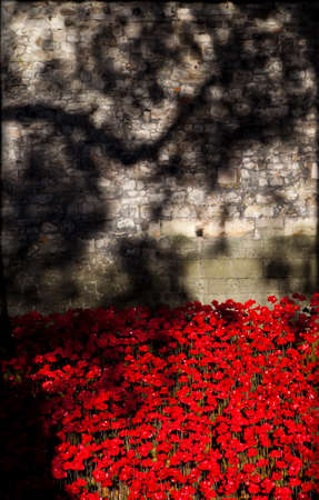 A view of the ceramic Poppies of the Blood Swept Lands and Seas of Red installation at the Tower of London.  The installation was created by artist Paul Cummins to mark the centenary of the outbreak of the First World War. Stock Photo