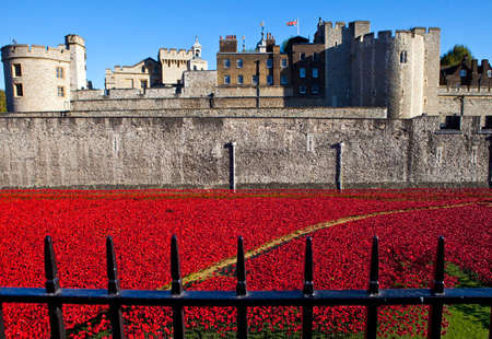 remembrance day poppy: A view showing the ceramic Poppies of the Blood Swept Lands and Seas of Red installation at the Tower of London.  The installation was created by artist Paul Cummins to mark the centenary of the outbreak of the First World War.