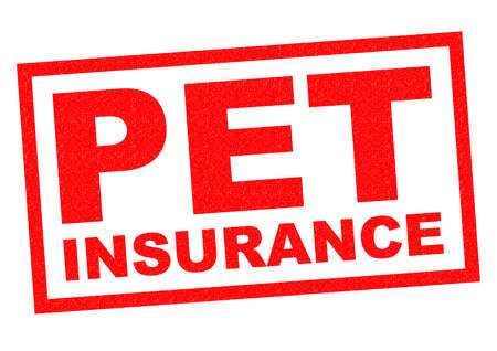 white backing: PET INSURANCE red Rubber Stamp over a white background.