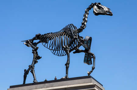 "plinth: A horse skeleton sculpture on the fourth plinth in Trafalgar Square in London.  The installation is by German Artist Hans Haacke is entitled ""Gift Horse"". Editorial"