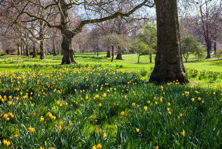 st james s: A beautiful view of St. James's Park in London during Spring.