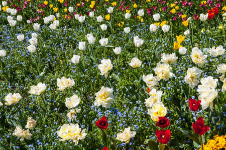 st james s: Beautiful display of flowers in St. James's Park in London. Stock Photo