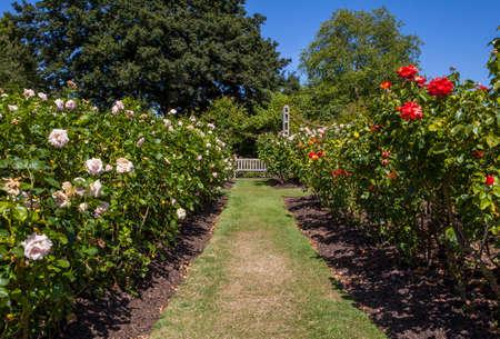 marys: A beautiful view in Queen Marys Gardens in Regents Park, London. Stock Photo