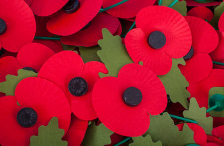 commemorate: Artificial Poppies used to commemorate Remembrance Day.