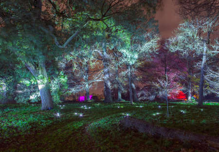 beautiful woodland: The beautiful Enchanted Woodland in Syon Park, London.