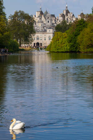 st james s: A Swan on the the lake in St. James's Park with the Horse Guards building in London.