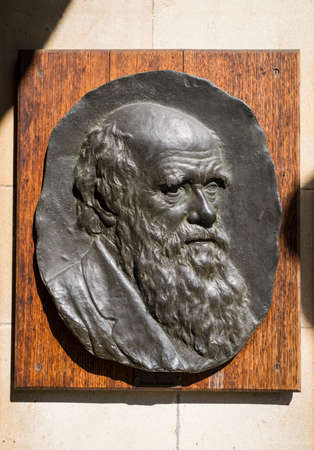 studied: A plaque sculptured into the bust of famous naturalist and biologist Charles Darwin on display at Christ�s College in Cambridge - where he studied.