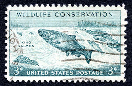 wildlife conservation: UNITED STATES OF AMERICA - CIRCA 1956: A used postage stamp from the United States of America, dedicated to Wildlife Conservation, circa 1956.