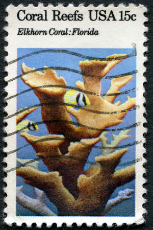 elkhorn coral: UNITED STATES OF AMERICA - CIRCA 1980 : A used stamp printed from the USA showing Coral Reefs, Elkhorn Coral in Florida, circa 1980