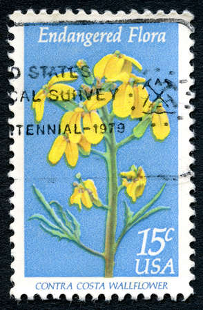 postmarked: UNITED STATES OF AMERICA - CIRCA 1979: A used postage stamp from the USA, with an illustration of the Contra Costa Wallflower, circa 1979.