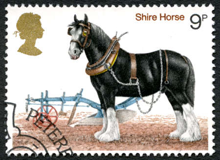 shire horse: GREAT BRITAIN - CIRCA 1978: A used postage stamp from the UK, depicting an illustration of a Shire Horse, circa 1978. Editorial