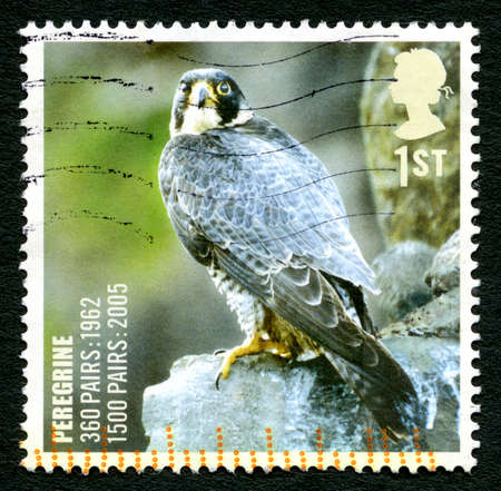 GREAT BRITAIN - CIRCA 2005: A used postage stamp from the UK, depicting an image of a Pelegrine Falcon bird of prey, circa 2005.