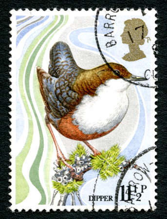 GREAT BRITAIN - CIRCA 1979: A used postage stamp from the UK, depicting an illustration of a Dipper and celebrating the Centenary of the Wild Bird Protection Act, circa 1979.