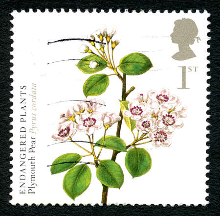 GREAT BRITAIN - CIRCA 2009: A used postage stamp from the UK, depicting an illustration of a Plymouth Pear plant (Pyrus Cordata) - commemorating endangered plants, circa 2009. Editorial