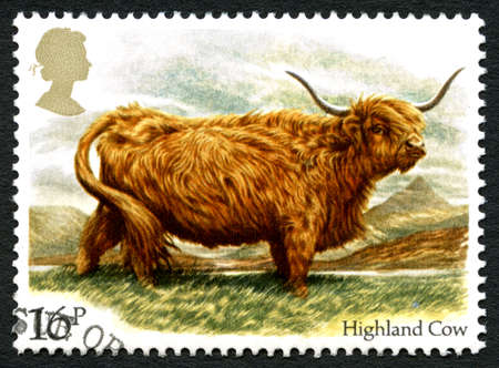 GREAT BRITAIN - CIRCA 1983: A used postage stamp from the UK, depicting an illustration of a Highland Cow, circa 1983.
