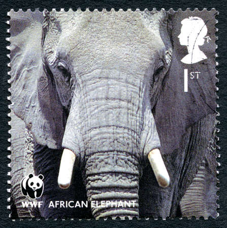 GREAT BRITAIN - CIRCA 2011: A used postage stamp from the UK, depicting an image of an African Elephant, circa 2011.