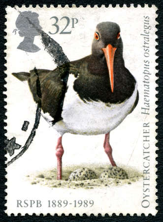 GREAT BRITAIN - CIRCA 1989: A used postage stamp from the UK, depicting an illustration of an Oystercatcher bird and celebrating the 100th Birthday of the RSPB, circa 1989.