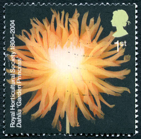 horticultural: GREAT BRITAIN - CIRCA 2004: A used postage stamp from the UK, depicting an image of a Dahlia 'Garden Princess' flower, circa 2004. Editorial