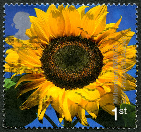 GREAT BRITAIN - CIRCA 2000: A used postage stamp from the UK, depicting an image of a Sunflower and celebrating the Eden Project visitor attraction in Cornwall, circa 2000. Editorial