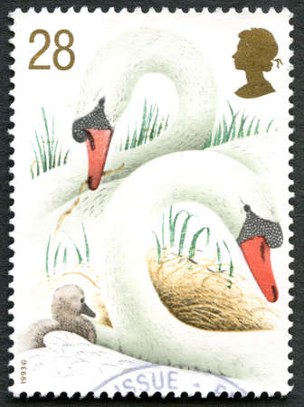 cygnet: GREAT BRITAIN - CIRCA 1993: A used postage stamp from the UK, depicting an illustration of two Swans with their young, circa 1993. Editorial