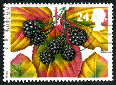 GREAT BRITAIN, UK - CIRCA 1993: A used postage stamp from the UK, celebrating the Autumn season with an illustratio of Blackberries and Autumnal foliage, circa 1993. Editorial