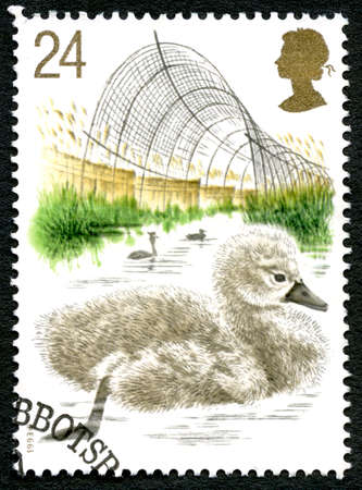 GREAT BRITAIN - CIRCA 1993: A used postage stamp from the UK, depicting an illustration of a  Cygnet - a baby Swan, circa 1993. Editorial