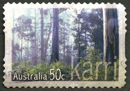 karri: AUSTRALIA - CIRCA 2005: A used postage stamp from Australia, depicting an image of the Karri tree, also known as the Eucalyptus Diversicolor, circa 2005. Editorial