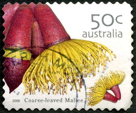 AUSTRALIA - CIRCA 2005: A used postage stamp from Australia, depicting an image of a Coarse Leaved Mallee flower, circa 2005.
