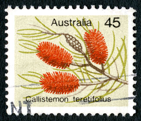 AUSTRALIA - CIRCA 1975: A used Australian postage stamp, depicting an illustration of a Melaleuca orophila, also known as a needle bottlebrush, circa 1975.