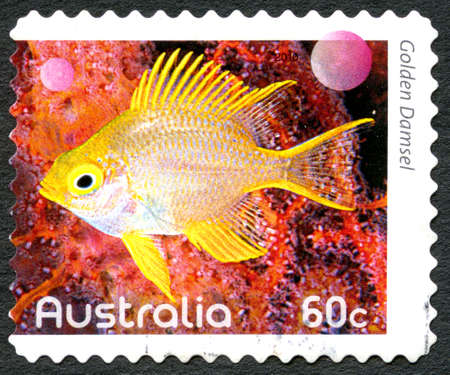 indo: AUSTRALIA - CIRCA 2010: A used postage stamp from Australia, depicting an image of a Golden Damsel fish, circa 2010.