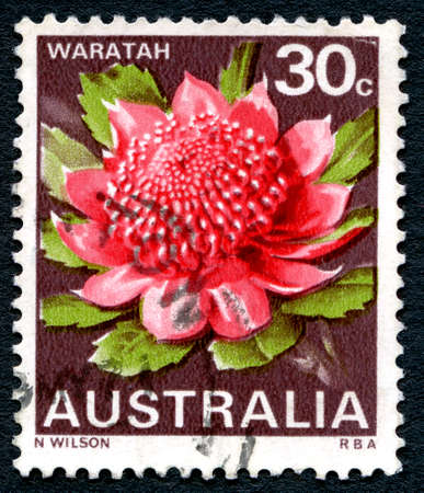 AUSTRALIA - CIRCA 1968: A used postage stamp from Australia depicting an illustration of a Waratah plant, circa 1968. Editorial
