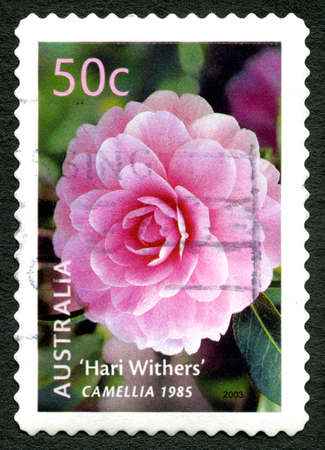 poststempel: AUSTRALIA - CIRCA 2003: A used postage stamp from Australia, depicting an image of a Camellia flower, circa 2003.